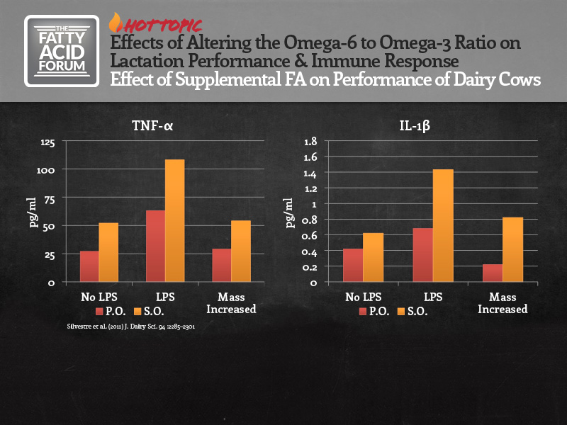 Dr. Jose Santos from the University of Florida evaluates the impact of altering the ratio of omega-6 to omega-3 FA on diets fed to early lactation cows in the areas of lactation and immune response.